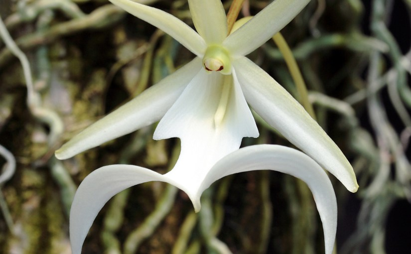 Studying Fungi Amid the Ghost Orchids