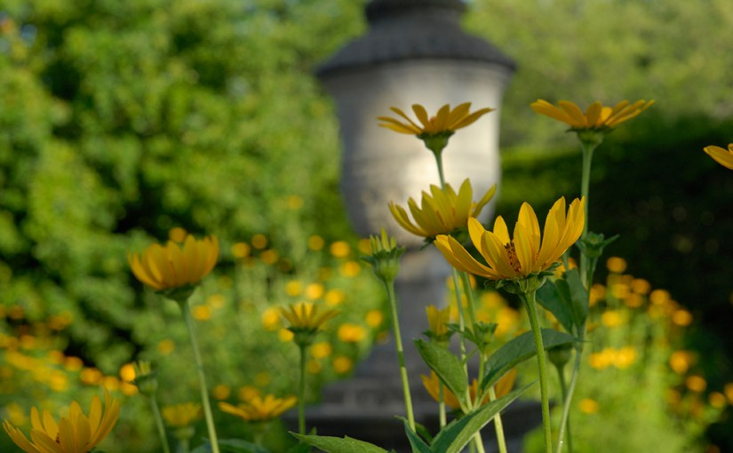 PHOTO: Black-eyed Susans bloom in front of the urn in the English Walled Garden.