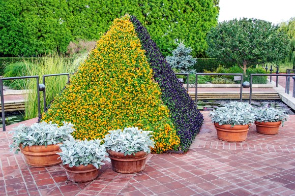 The Viola Pyramids are currently on display in the Heritage Garden