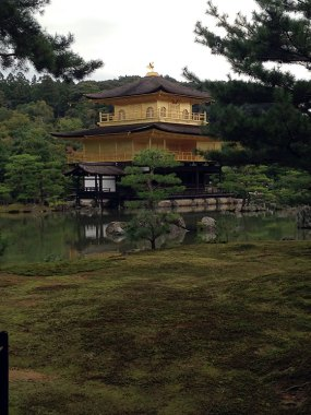 PHOTO: The Golden Pavilion surrounded by beautiful pines and the immaculate moss.