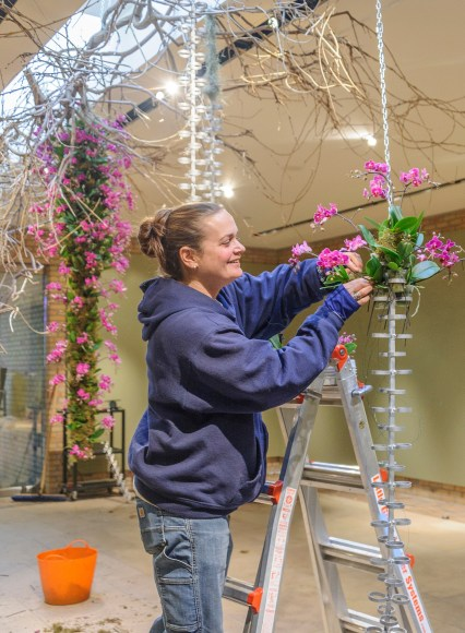 PHOTO: Horticulturist Heather Sherwood creating orchid chain.