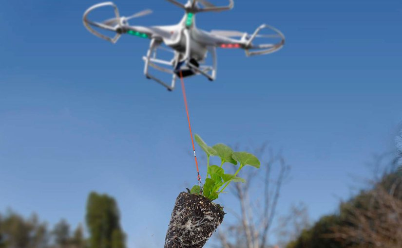 Drone quadcopter delivers a small seedling plant to a gardener.