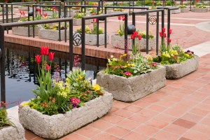 PHOTO: Heritage Garden troughs from May 2011 display.