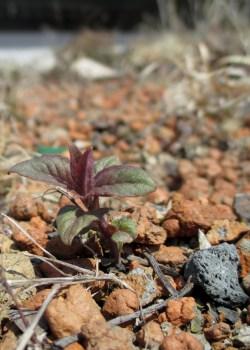 PHOTO: Plant seedling.