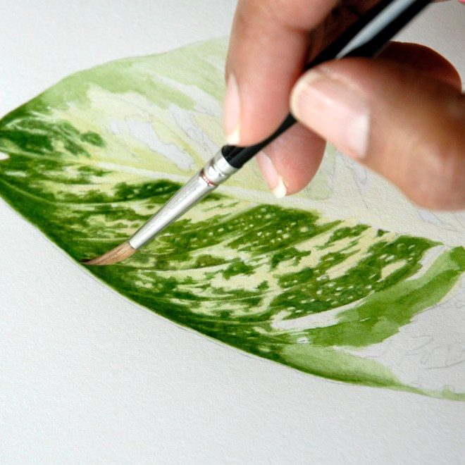 PHOTO: The hand of Nancy Snyder as she paints a leaf for a botanical watercolor illustration.