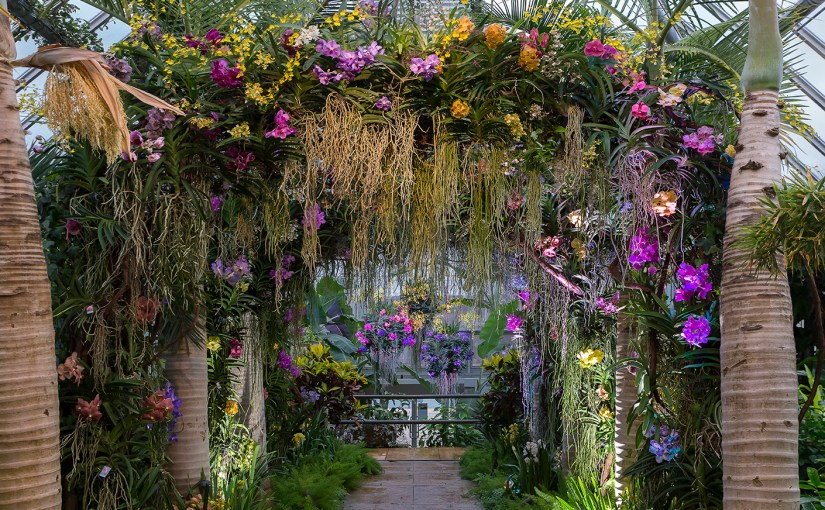 Designing the 2017 Orchid Show