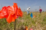PHOTO: planting flags on a foray to monitor slipper orchids.