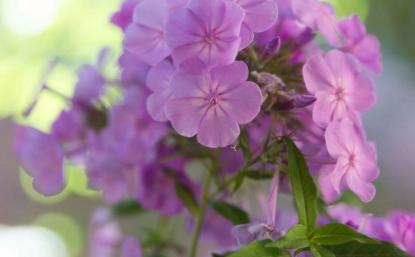 Use Fragrant Plants for a Breathtaking Garden