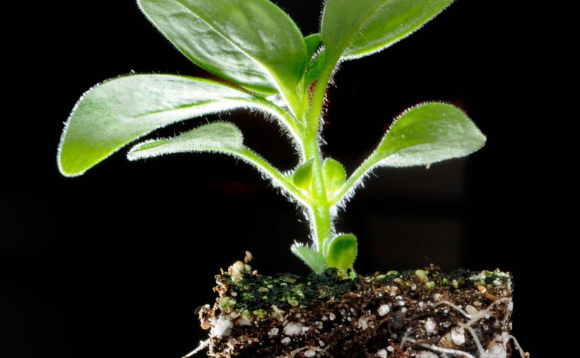 60-Second Science: Plants' Roots Helped Them Move to Land
