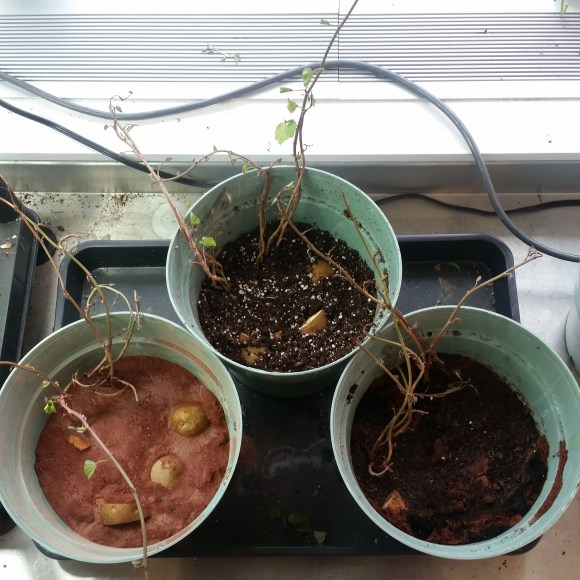 Martian soil, potting soil, and mixture of Martian soil with vermicompost