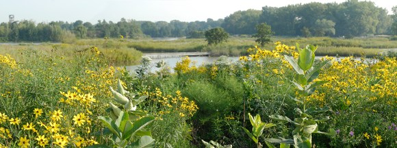 PHOTO: The Dixon Prairie in full bloom.