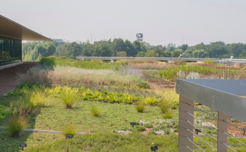 Three Years of the Green Roof Garden…and Counting