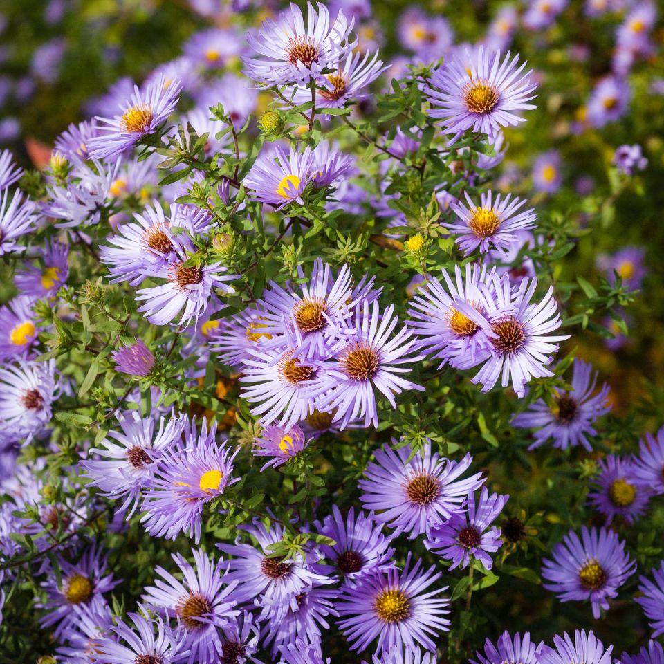 what u0027s in bloom my chicago botanic garden