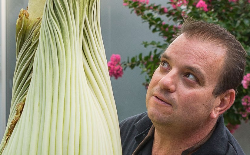PHOTO: Tim Pollak checks in on Spike the titan arum.