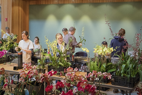 Volunteers from all departments unpack orchids for the Orchid Show 2017.