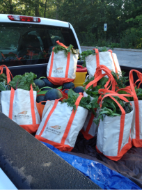 PHOTO: Truck bed laden with grocery bags full of fresh vegetables.