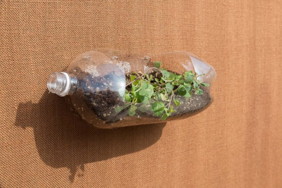 PHOTO: a 2 liter plastic bottle turned sideways and filled with soil and oregano plants is pinned to the wall.