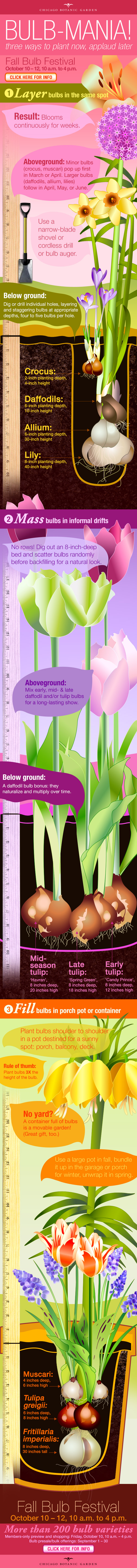 ILLUSTRATION: Bulb planting infographic.