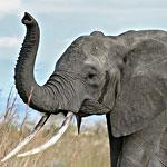 On World Wildlife Day