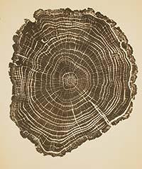 Woodcut Opens…