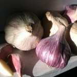 PHOTO: Garlic bulbs