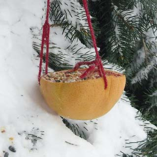Make a Grapefruit Bird Feeder