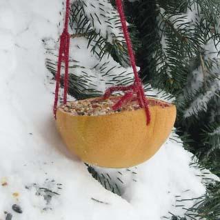 Make a Grapefruit Bird Feeder