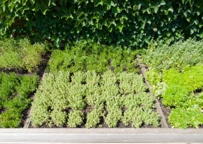 PHOTO: The Herbs de Provence garden bed in the Fruit & Vegetable Garden.