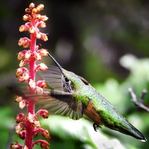 How do hummingbirds choose flowers?