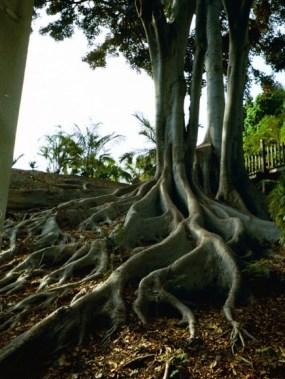 PHOTO: tree roots.