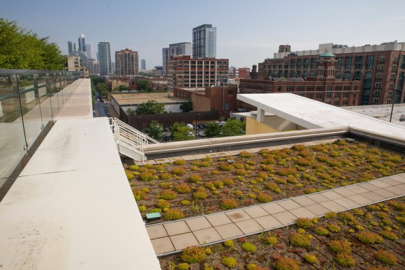PHOTO: The roof of McCormick Place West planted with sedum