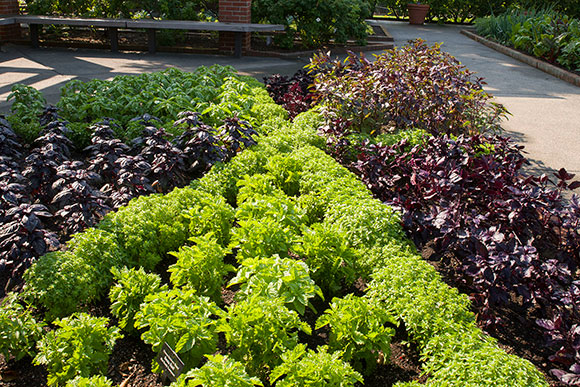 "PHOTO: seven types of basil planted in a traditional ""pie slice"" herb bed."