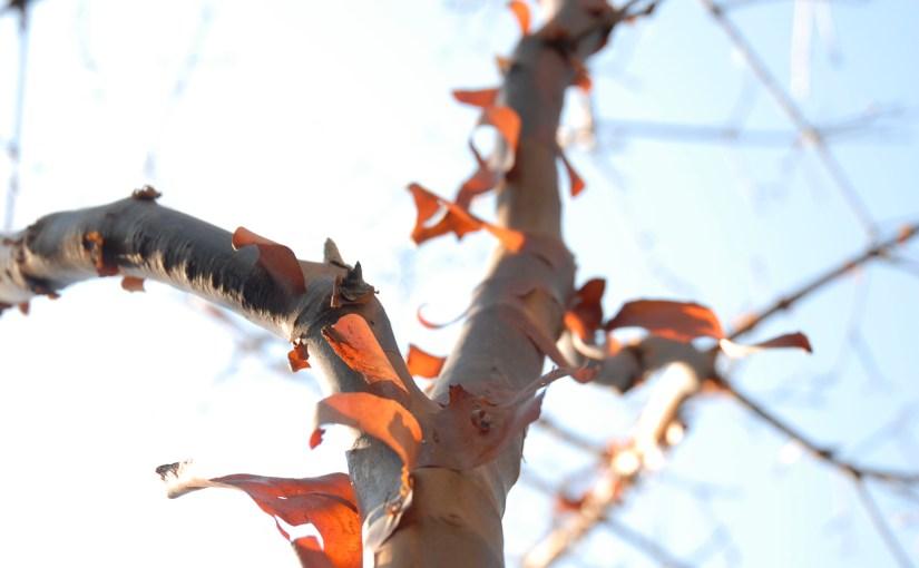 Identifying Trees in Winter