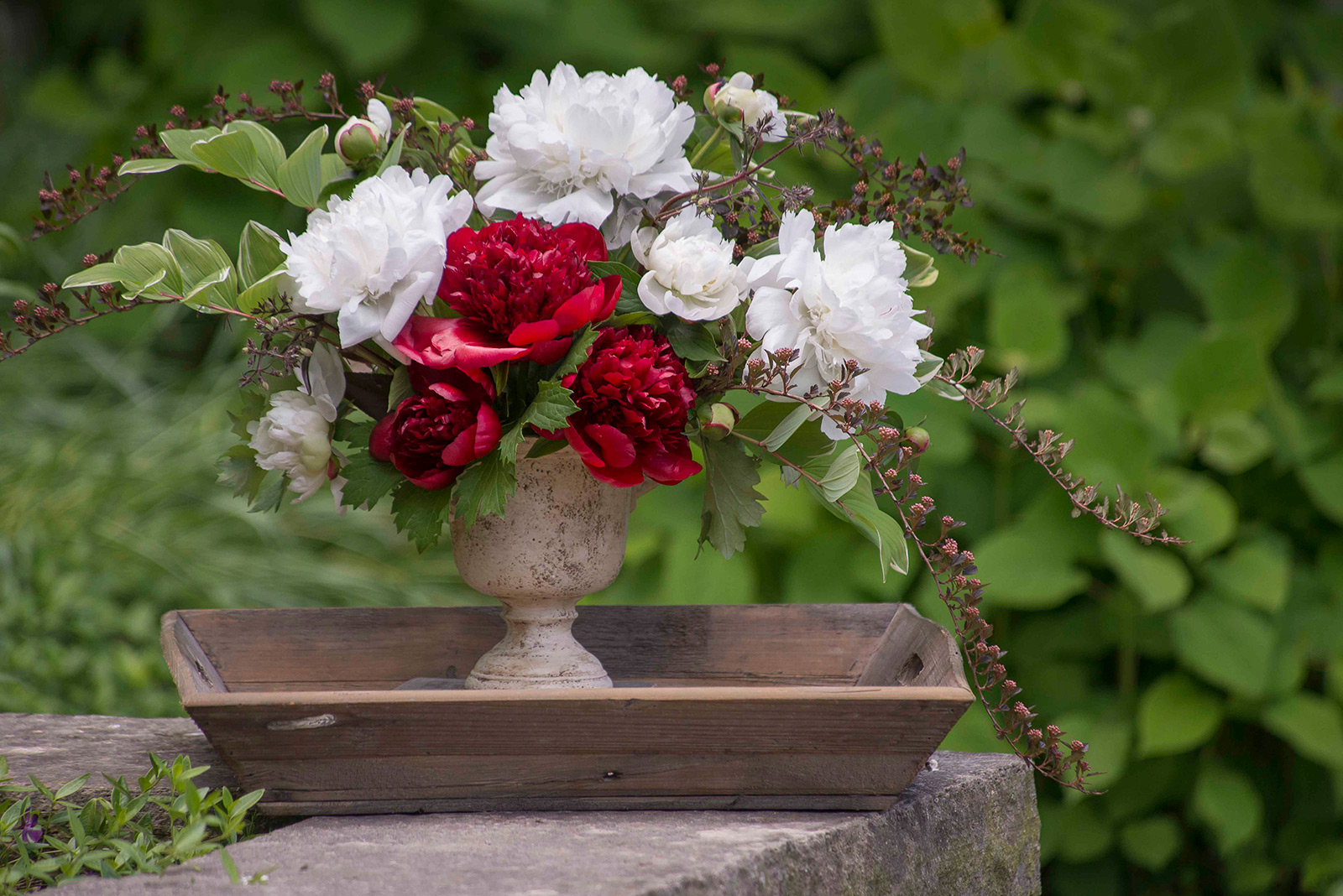 Make peony blooms last longer my chicago botanic garden storing peony stems allows you to use early and mid season blossoms together in an arrangement izmirmasajfo