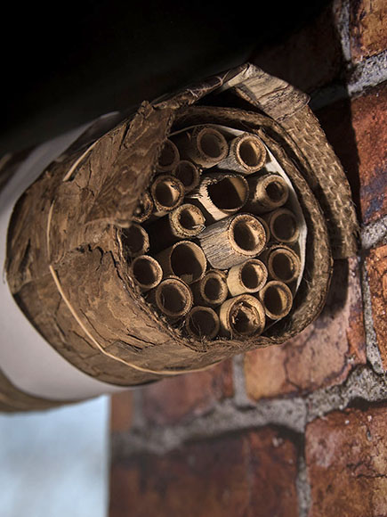 Place the bee house against a flat surface in a protected area, with a southwest exposure.