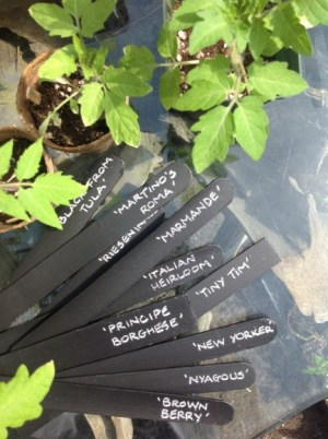 PHOTO: Pile of black plant markers with names inscribed.