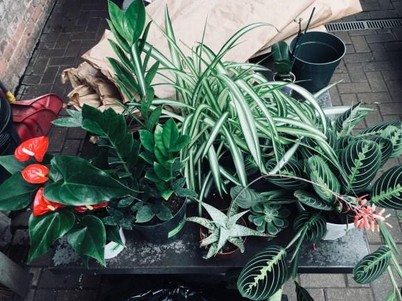 Erica's starter plant family