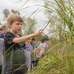 A young boy studies tallgrass on the prairie during a guided field trip at the Chicago Botanic Garden.