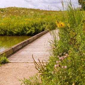 PHOTO: The boardwalk to Marsh Island.