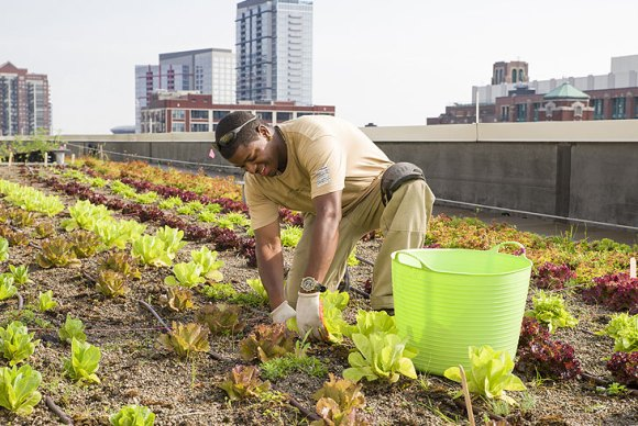 Stacey Kimmons, Windy city Harvest graduate, works on the rooftop garden at McCormick Place.