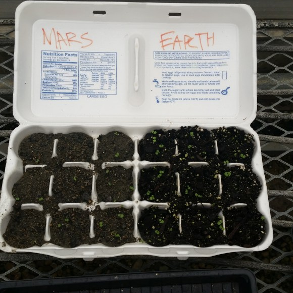 PHOTO: an 18 egg egg carton that has the 9 cells on the left planted with Martian soil and the nine cells on the right planted in earth potting soil; marjoram has sprouted in all 18 cells.