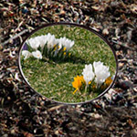 Springvision comes to the Garden!