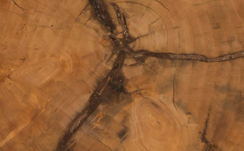 Tree rings.