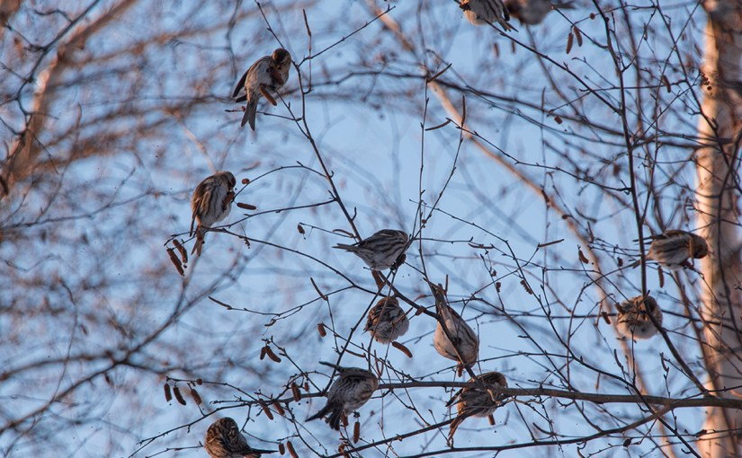 Food for Thought—and for Birds