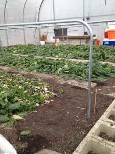 PHOTO: hoop house in winter.