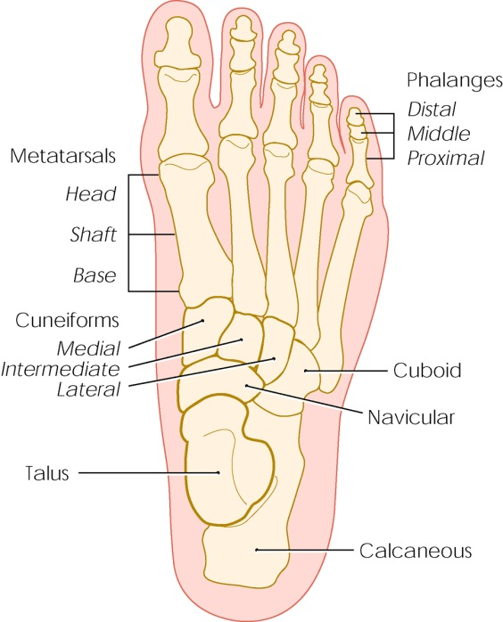 diagram of tibia stress fracture scosche gm2000 wiring fractures cleveland clinic