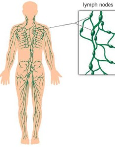 Lymphatic system and lymph nodes also swollen cleveland clinic rh myevelandclinic