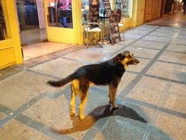 mendoza street dog