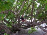 Christmas_in_Abaco_2007-12