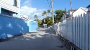 Turtle_Trot_Hopetown_Abaco_2015_20151126_0354